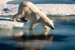 WWF Travel - Isole Svalbard wwf travel - Svalbard XL 300x200 - WWF Travel: in viaggio per natura