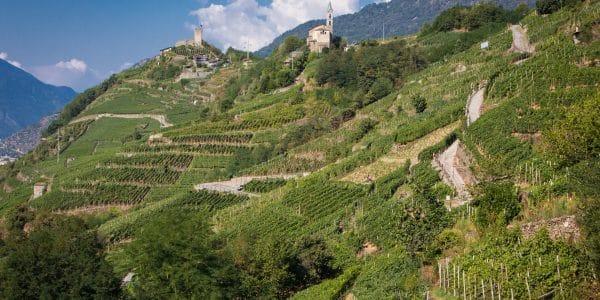 valtellina - Terrazzamenti 600x300 - Valtellina: sulla strada del vino fino a Bormio