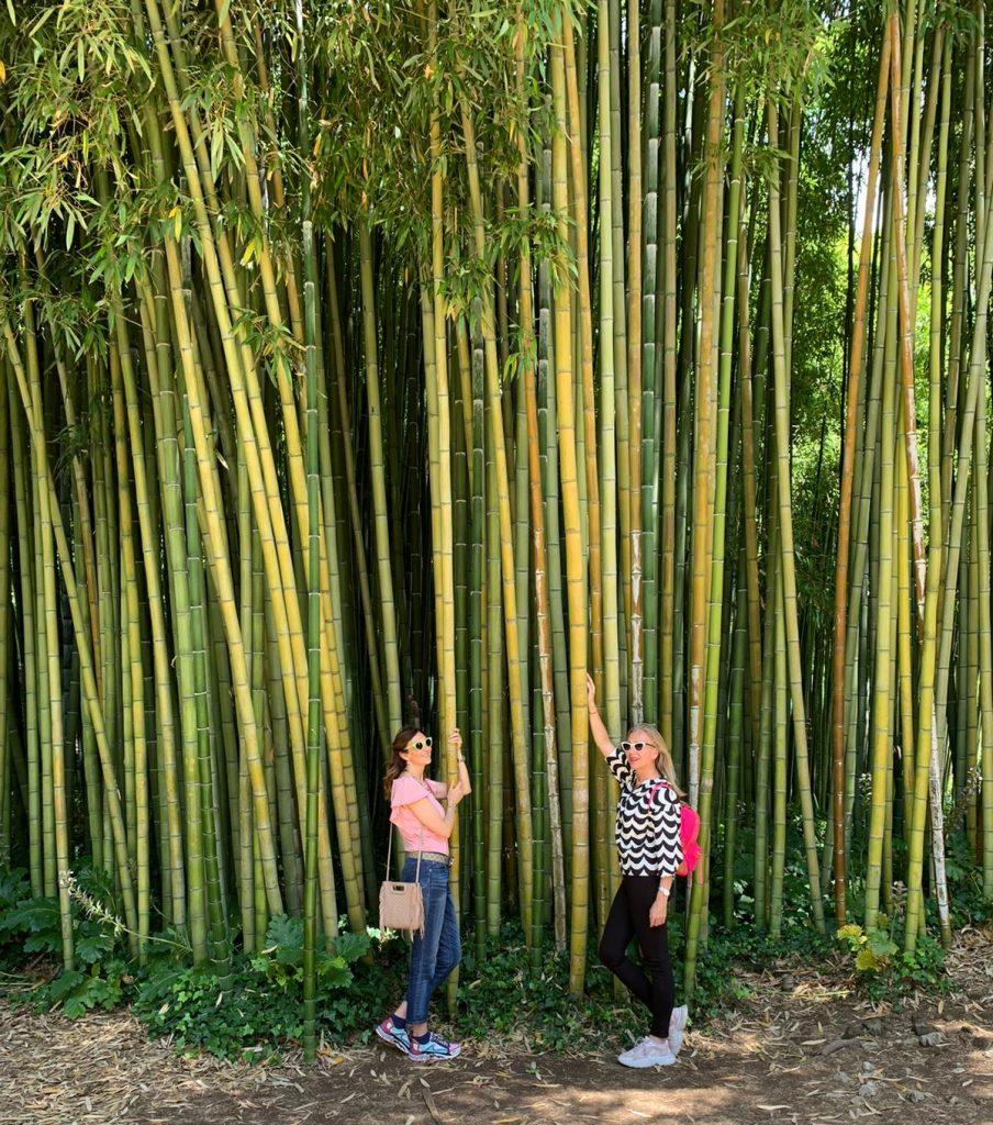 Giardino di Ninfa - Sorgente di Bambù