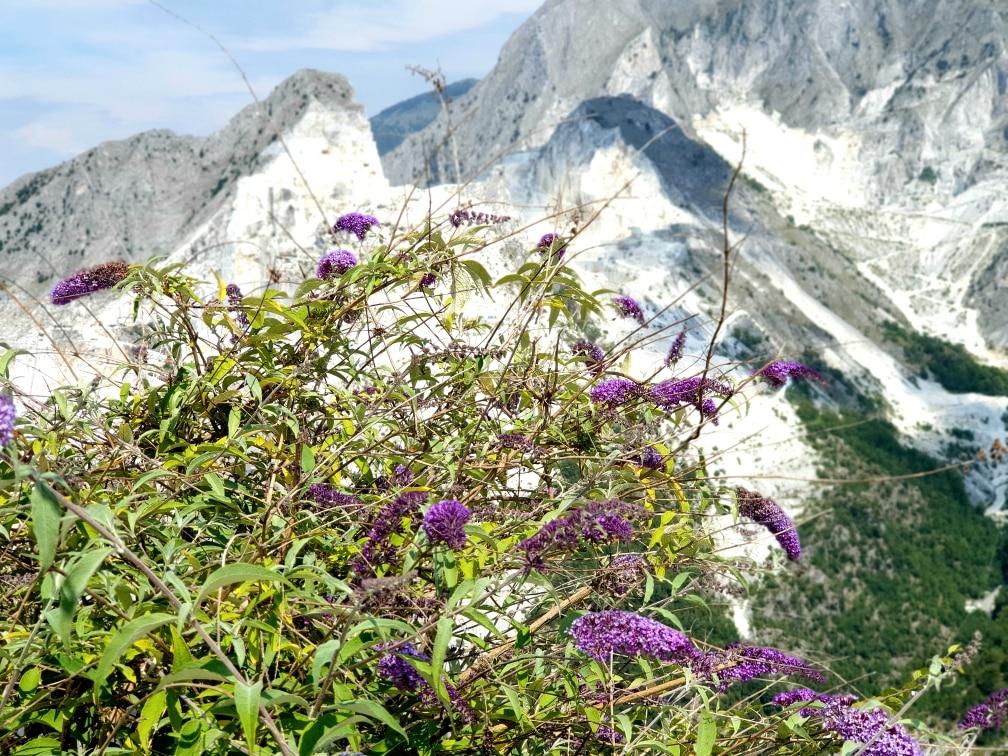 Carrara - Alpi Apuane carrara - 20200721 130915 - Carrara: viaggio nella storia millenaria del marmo